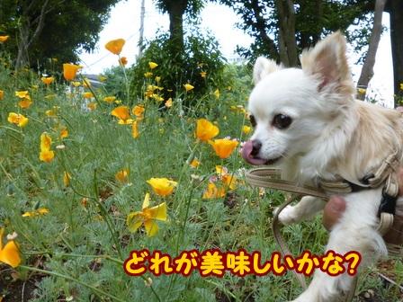 blog6022a.jpg