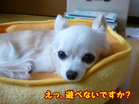 blog6026a.jpg