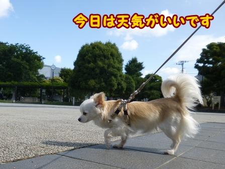 blog6078a.jpg