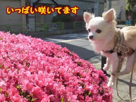 blog6084a.jpg