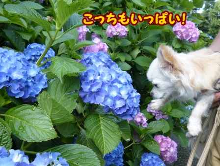 blog6085a.jpg