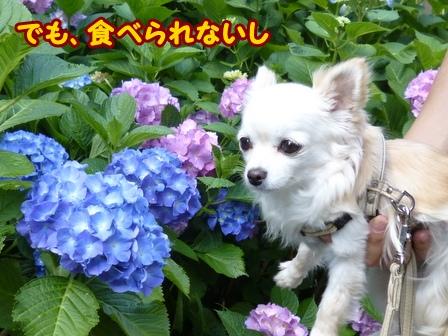 blog6088a.jpg