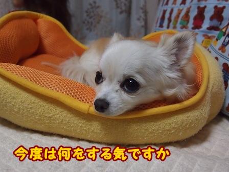 blog6105a.jpg