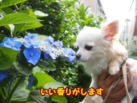 blog6175a.jpg