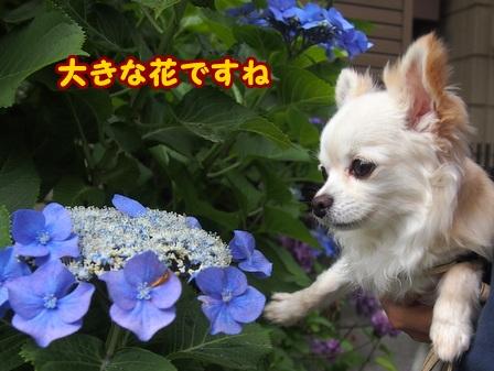 blog6176a.jpg