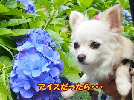 blog6178a.jpg