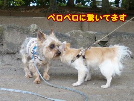 blog6188a.jpg
