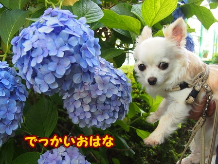 blog6211a.jpg