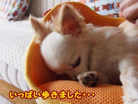 blog6224a.jpg