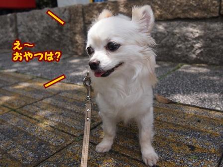 blog6229a.jpg