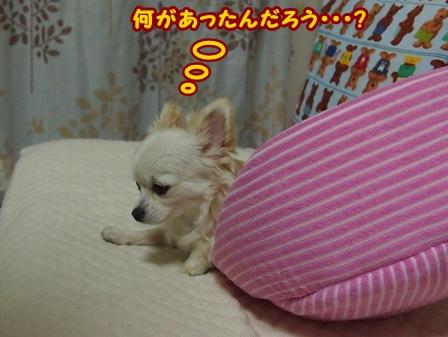 blog6247a.jpg