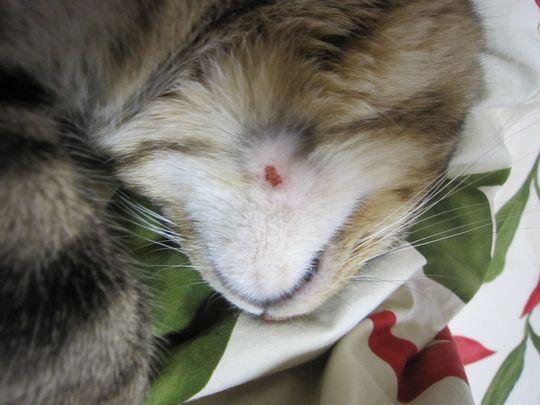 ナナちゃんの顎の傷