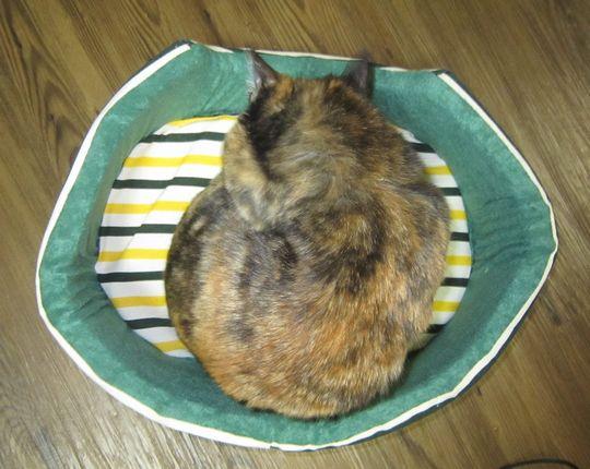cathouse マルちゃん