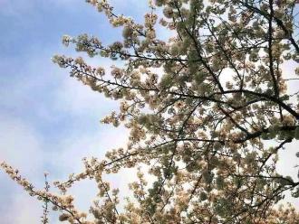 15-4-1 桜1