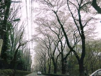 15-4-1 桜6
