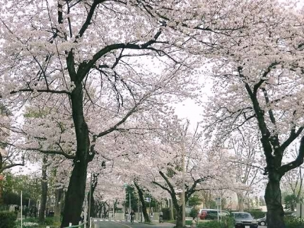 15-4-1 桜4