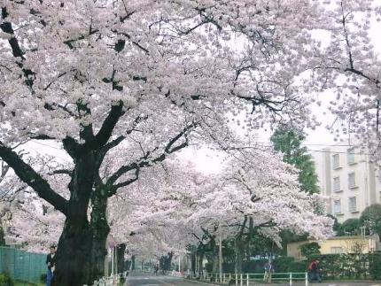 15-4-1 桜5