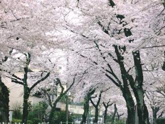 15-4-1 桜3