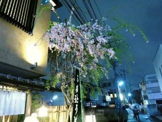 15-4-7 桜