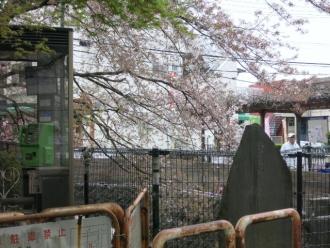 15-4-10 桜がが