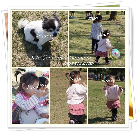 cats7_20150515155808028.jpg