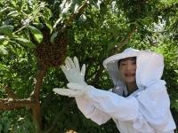 分蜂 初体験♪