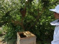蜂群の下に新しい巣箱準備