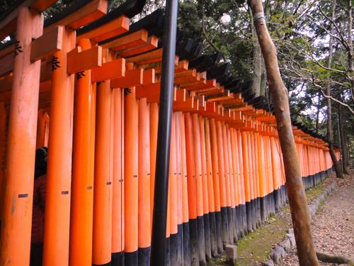 201412Fushimiinari_Kyoto-5.jpg
