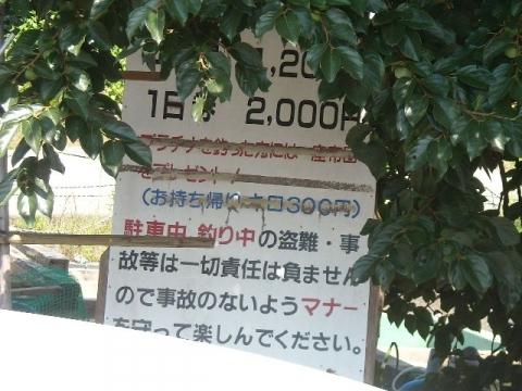 つり吉・H26・8 釣り堀