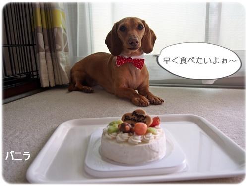 バニラ3歳誕生日ケーキ