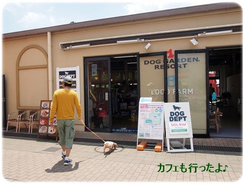 DOG DEPT CAFE