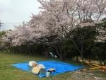 お花見001 (1)