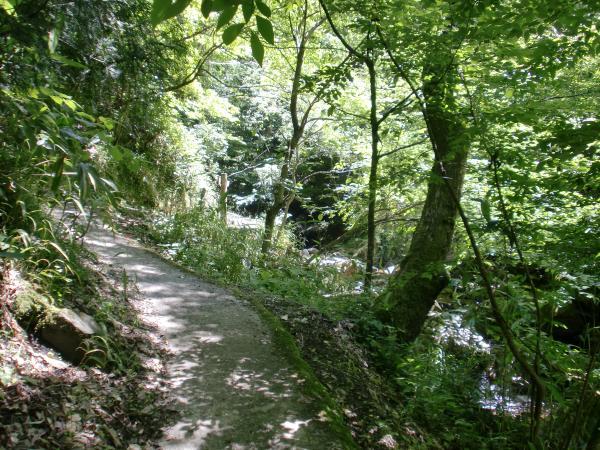 滝までの遊歩道