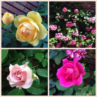 fc2blog_201505161124155dd.jpg