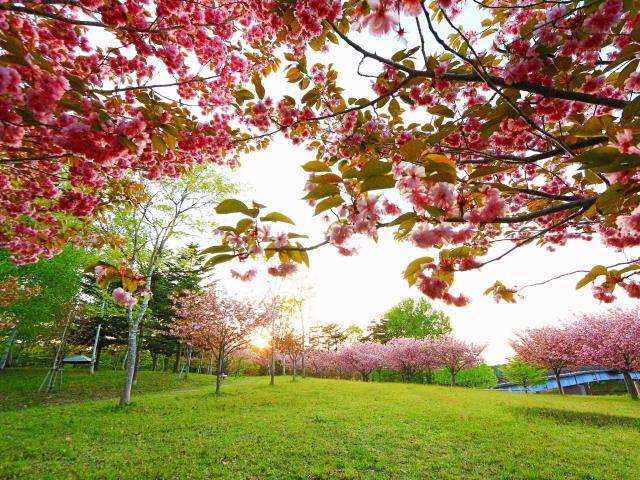 野木和公園5