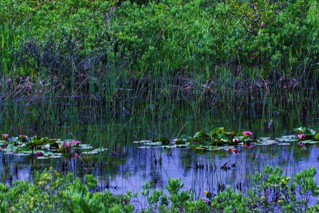 田代湿原4