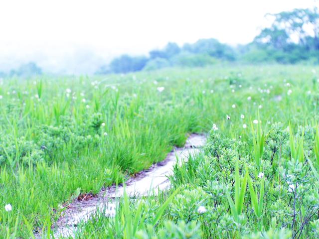 田代湿原8