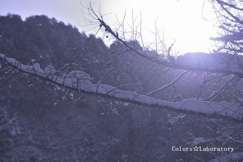 雪晴れの朝 1