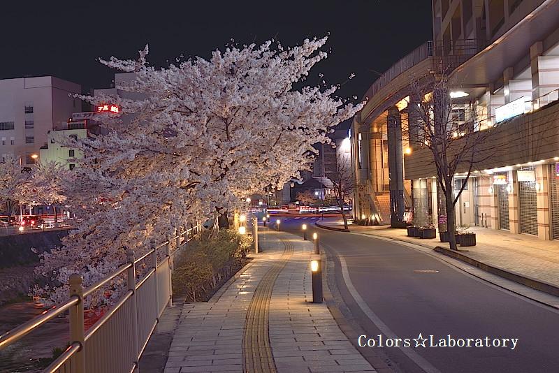 2015 4月9日 夜桜 4 A