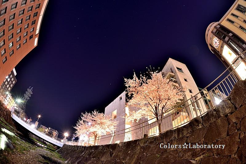 2015 4月9日 夜桜 1