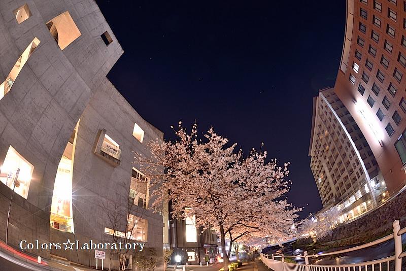 2015 4月9日 夜桜 2 A