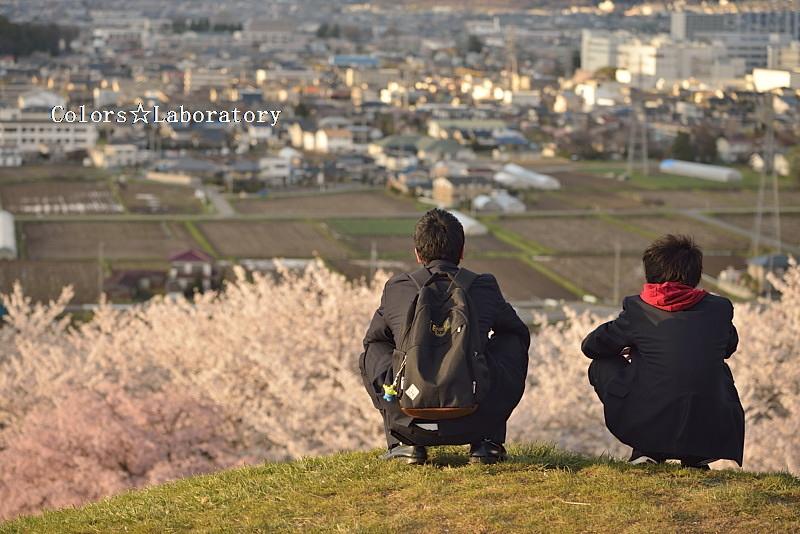 2015 それぞれの桜 1 A