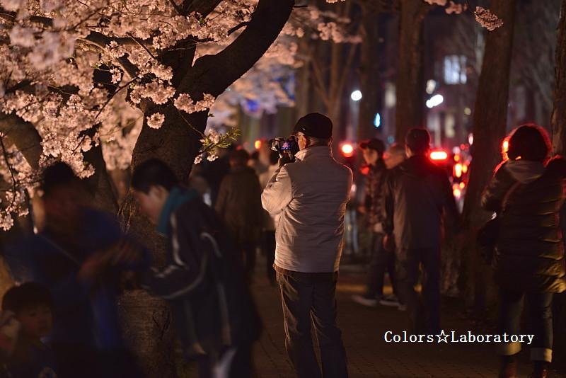 2015 それぞれの桜 4