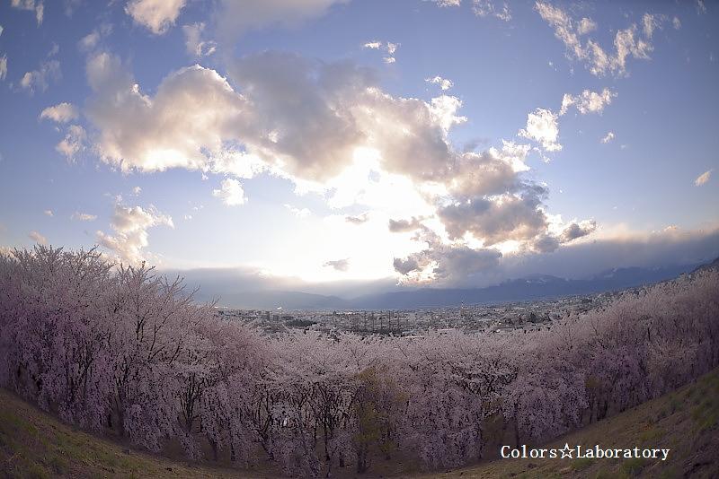 2015 4月15日 弘法山 2 A