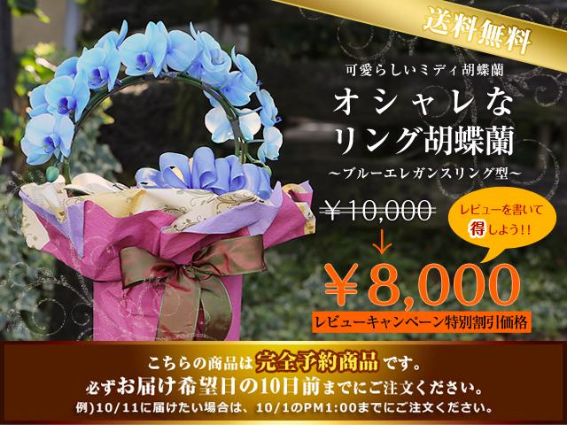 青胡蝶蘭 母の日 珍しい花