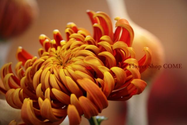 冬の花 かっこいい花