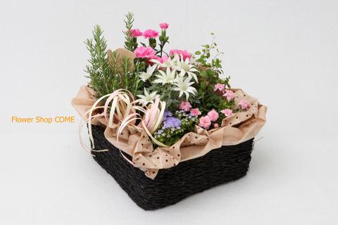 ガーデニング 春 花