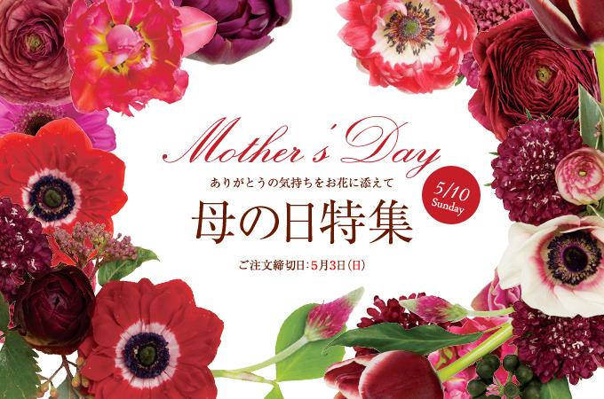 母の日 人気 花