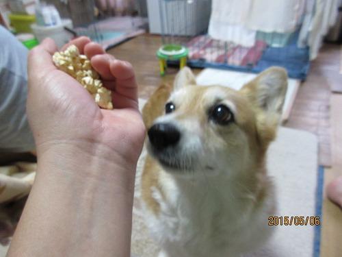 犬生初、ワンコポップコーン