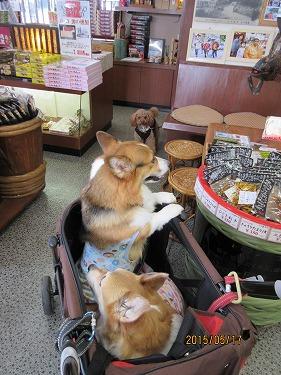 中型犬がカートって!?